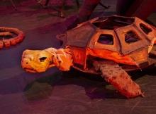 Tortoise_puppeteer-Sabrina-DeWeerdt